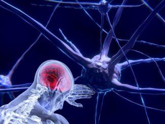 meilleur livre neurosciences
