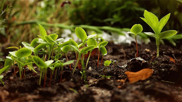 meilleur livre permaculture